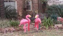 Pink flamingos -- festive for all seasons