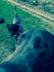 Tucker and Samba