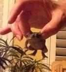 Frog - Copy
