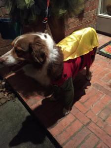 Robin hound